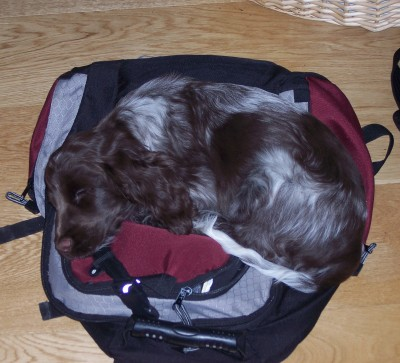 Laika und ihr Rucksack